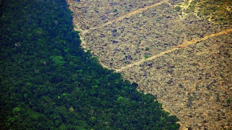 Informe Planeta Protegido 2020,