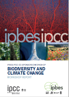cambio-climatico-y-la-perdida-de-biodiversidad-deben-abordarse-juntos-no-por-separado